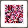 Hibiscus Buds Framed Print