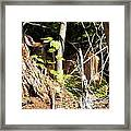 Hidden Fawn Framed Print