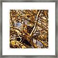 Hidden Owl Framed Print