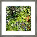 High Country Wildflowers Framed Print