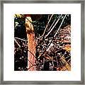 High Rise Fungi Framed Print