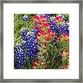Hill Country Bloom Framed Print