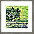 Hill Country Scenic Hdr Framed Print