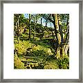 Hillside Forest Framed Print