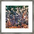 Hint Of Fall Colors 15813 Framed Print