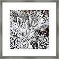 Hoarfrost 18  Framed Print