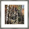 Hocking Hills Trees Framed Print