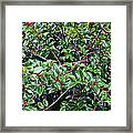 Holly Bush - Framed Print