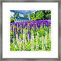 Holy Lupines Framed Print