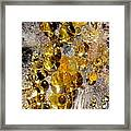 Honey Fungus Framed Print