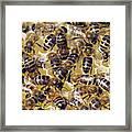 Honeybees On Honeycomb Framed Print