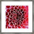 Honeycomb Dahlia Framed Print