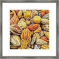 Hordes Of Gourds Framed Print