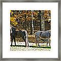 Horses In Autumn Pasture   Framed Print