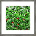 Huckleberry Bush Framed Print