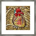 Human Heart Over Vintage Chart Of An Open Chest Cavity Framed Print