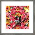 Hummingbird And Hibiscus Framed Print