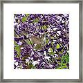 Hummingbird Flowers Framed Print