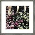 Hydrangea Blossoms Framed Print