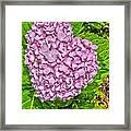 Hydrangea Love Framed Print