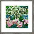Hydrangea With A New Look Framed Print