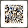 Ice Coated Bullrushes Framed Print