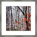 Ice Trees Framed Print