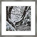 Idaho Spring Framed Print