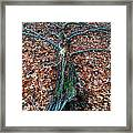If A Tree Falls In The Woods Framed Print