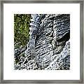 Iguana En La Roca Framed Print