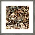 Iguana On A Trail In Manuel Antonio National Preserve-costa Rica Framed Print