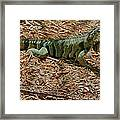 Iguana With A Smile Framed Print