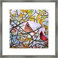 Illinois Cardinals  Framed Print