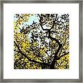 Illuminated Oak Tree Framed Print