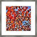 Impressions Of Autumn Framed Print