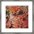 In A Golden Light 001 Framed Print