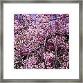 In Bunches Framed Print