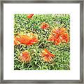 In Flanders Fields The Poppies Grow Framed Print