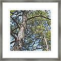 In New Jersey's Pinelands Framed Print