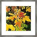 In Praise Of Yellow Framed Print