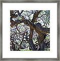 In The Depth Of Enchanting Forest II Framed Print