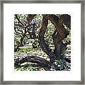 In The Depth Of Enchanting Forest Iv Framed Print