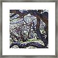 In The Depth Of Enchanting Forest Framed Print