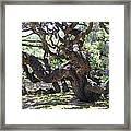 In The Depth Of Enchanting Forest Vi Framed Print