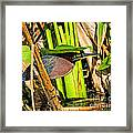 In The Shade Little Green Heron Framed Print