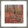 In The Shadows Of Fall 1 Framed Print