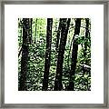 In Touch With Creation Framed Print