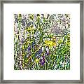 Incandescent Daisies Framed Print