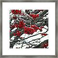 Incased Berries Framed Print