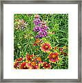 Indian Blankets And Lemon Horsemint Framed Print